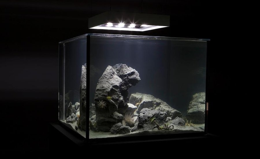 Pierre Huyghe's Zoodrama (2010)