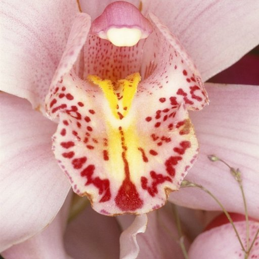 Flower Porn: 9 Erotic Portraits of Plants by Famous Artists That Will Put You in a Pollinating Mood