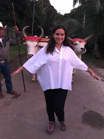 me with oxen