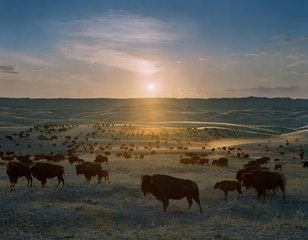 Flying H Buffalo Ranch, Walworth County, South Dakota, by Andrew Moore