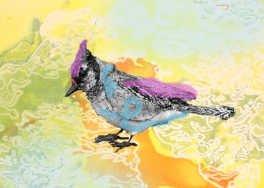 Anne Chu - Blue jay monotypes