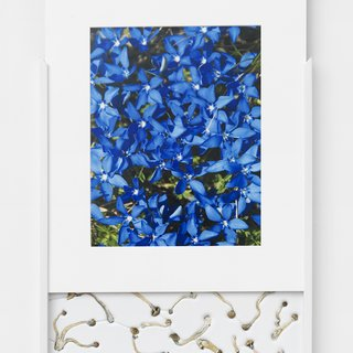Security Sliding Frame and Silk Road Mushrooms (Gentiana) art for sale