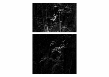 Daniel Steegmann Mangrané - Point Cloud Forest