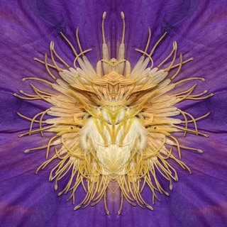 Clematis art for sale