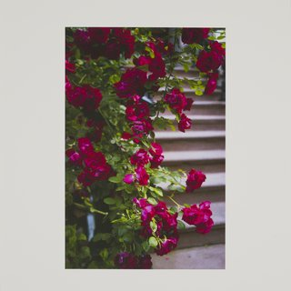 Stoop roses art for sale