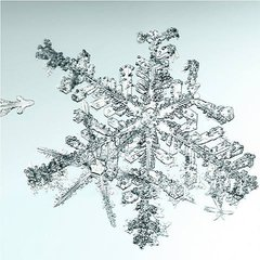 Untitled (Snowflake), by Doug and Mike Starn
