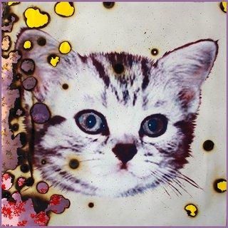 I Love Kitties (bruised) art for sale