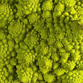 Romanesco Broccoli art for sale