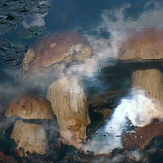 Pilze im Wasser (Mushrooms in Water) art for sale