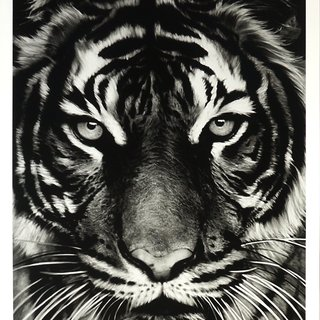 Tiger  art for sale