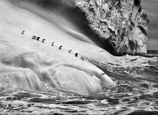 Chinstrap penguins dive off icebergs located between Zavodovski and Visokoi islands in the South Sandwich Islands, by Sebastião Salgado