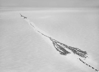 Nenets of the Siberian Arctic, Russia, by Sebastião Salgado