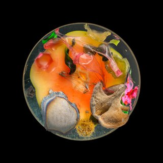 Vanitas (in a Petri dish) 8 art for sale