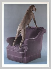 Overview, by William Wegman