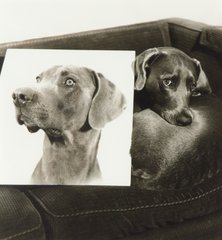 Double Portrait, by William Wegman