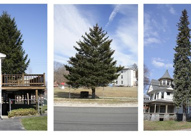 Matthew Jensen - Untitled (from Every Tree in Town), Set of 3