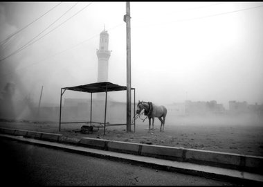 Moises Saman - Baghdad. May 13, 2008. A horse is tied to an electricity post during a sandstorm in the Sadr City district of Baghdad.