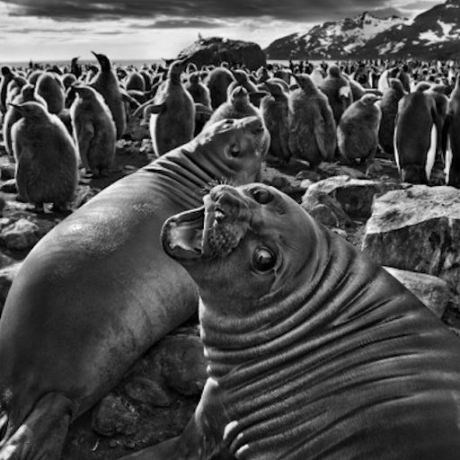 How to Understand Sebastião Salgado's Exquisite—and Harrowing—Photographs of Nature's Splendor