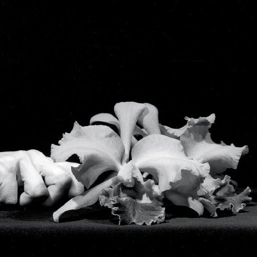 Herbert Muschamp on Why Mapplethorpe's Flowers Matter
