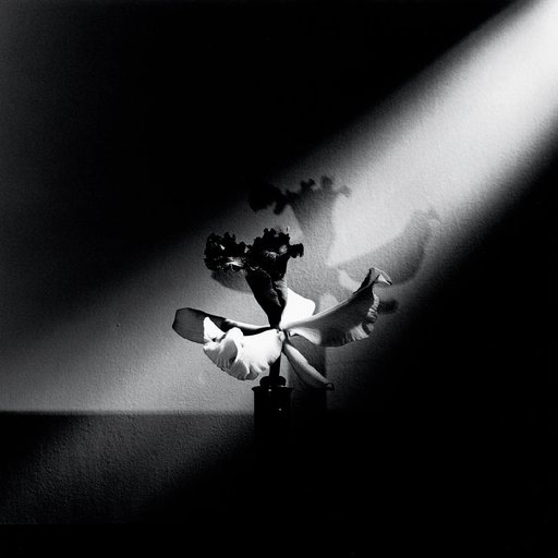 10 Seductive Black & White Flora by Mapplethorpe