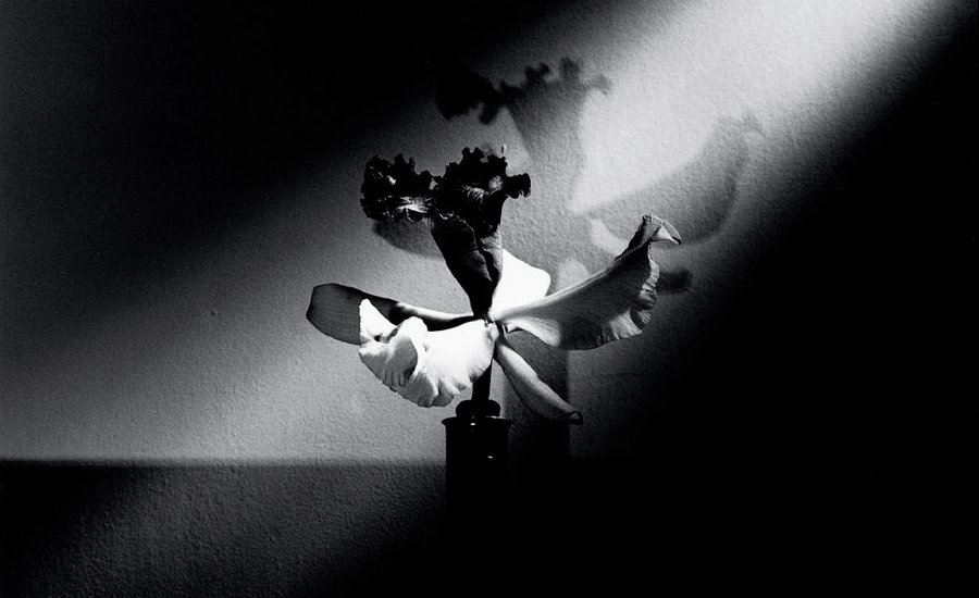 10 Black-and-White Flowers by Mapplethorpe That Will Seduce You