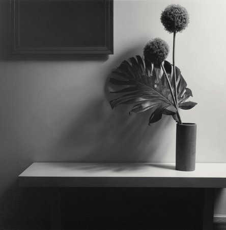 10 black and white flowers by mapplethorpe that will seduce you flower 1980 mightylinksfo