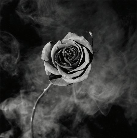 Rose with Smoke, 1985