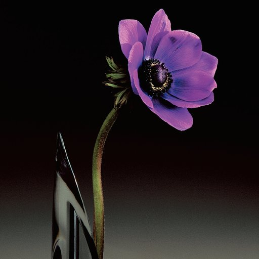 10 Ravishingly Vivid, Colorful Flowers by Mapplethorpe