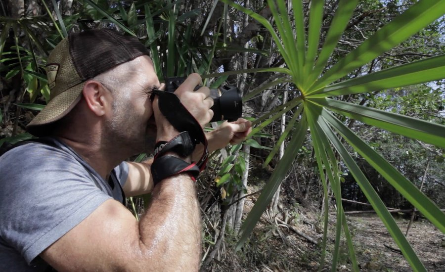 Watch Artist Bill Claps's Lyrical Quest for Inspiration in the Cuban Jungle