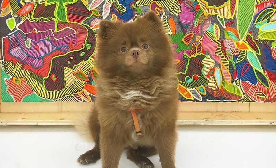 7 Dogs to Follow on Instagram for the Inside Scoop on NYC's Art Scene