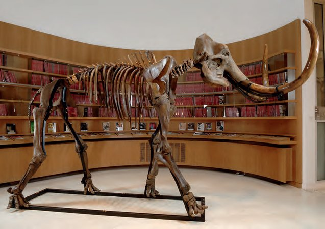Skeleton of a mammoth, c.13,000 BC