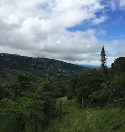 View from Klaus' home in El Yunque