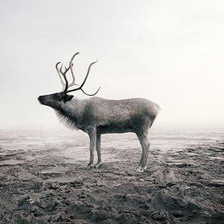 Clam Caribou (Large) art for sale