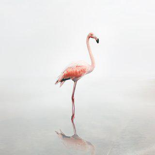 For Now Flamingo (Large) art for sale