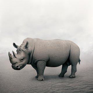 Restful Rhino (Large) art for sale