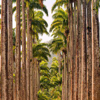 Jardim Botanico Palms art for sale