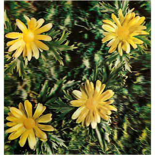 Untitled (Osaka Daisies) art for sale