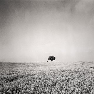 Bernat Garcia, El Camino 02 (The Road)