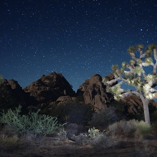 Joshua Tree Nocturnal I art for sale