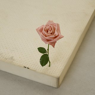 One Perfect Rose art for sale