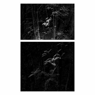 Point Cloud Forest art for sale