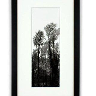 Tall Black Trees art for sale