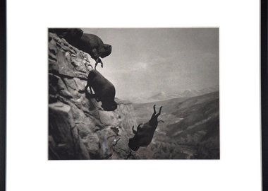 work by David Wojnarowicz - Untitled (Buffaloes)