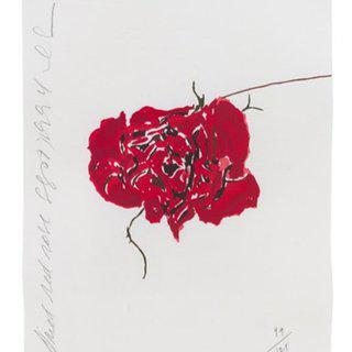 Dried Red Rose art for sale