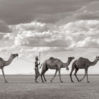 Arteti Leading Camels art for sale