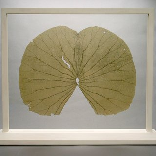 Gabriel Orozco, Lotus Leaves (Full Leaf)