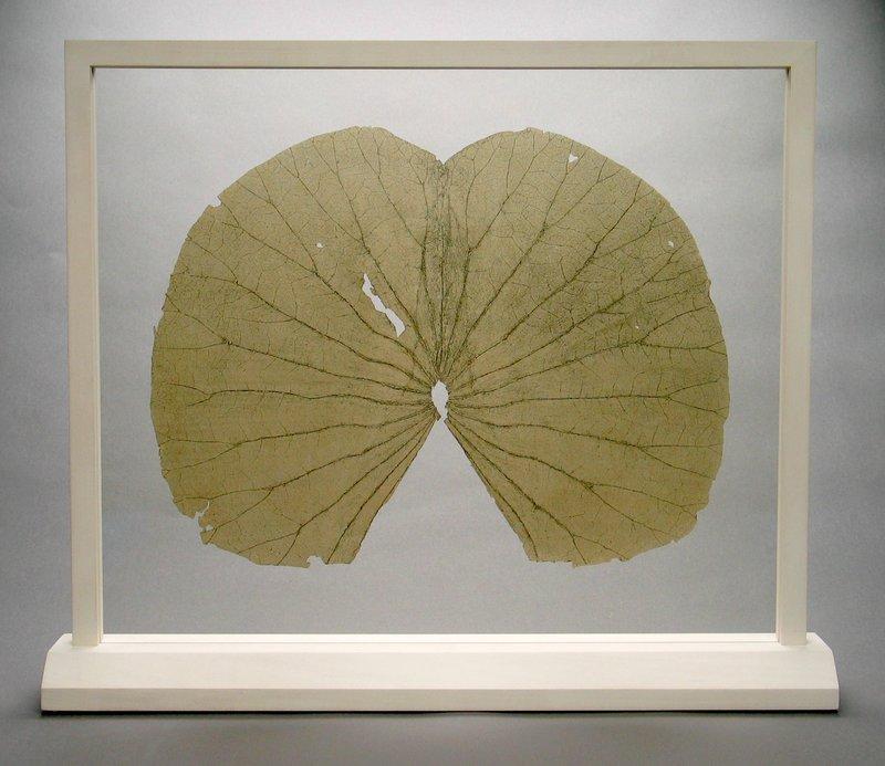 Gabriel Orozco Lotus Leaves Full Leaf For Sale Artspace