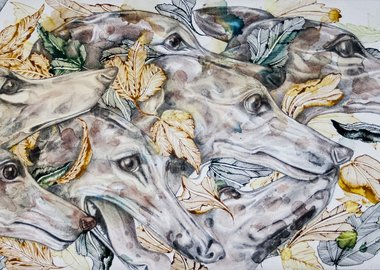 work by Giulia Ronchetti - Greyhounds
