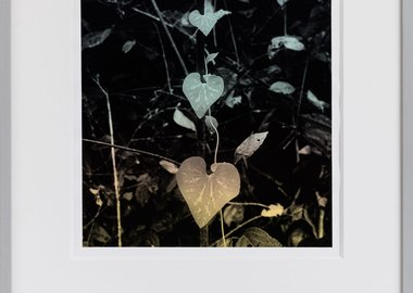 work by Hannah Collins - The Fertile Forest - plant grown secretly by th...