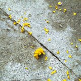 different view - Hope Dickens, Yellow flower - 1